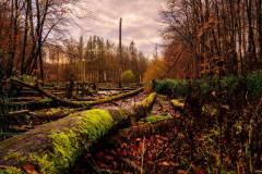 Naturwald Stodthagen